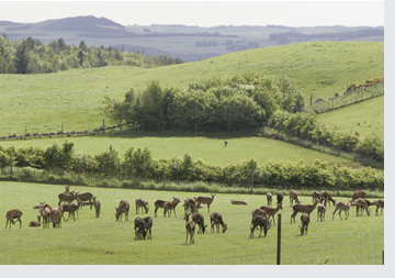 Deer Farming in Scotland and Scottish Venison